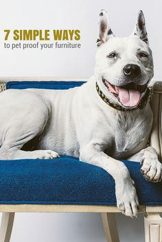 7 Simple Ways to Dog Proof Your Furniture
