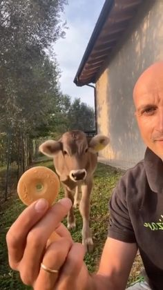 Funny Cow Videos, Cute Animal Videos, Funny Animal Pictures, Cabras Animal, Animal Memes, Cute Little Animals, Cute Funny Animals, Cute Cows, Cute Creatures