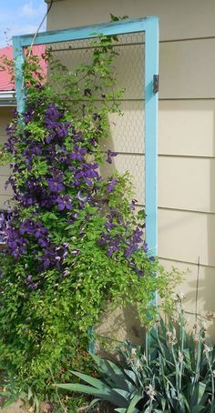 create a garden trellis using a screen door! This is perfect for when the screen rips, just replace with chicken wire. Cute!