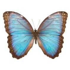 Natural, and nature inspired home décor, jewelry, apparel and art. We select our products through a unique scientific lens unlike any other in the industry. Morpho Butterfly, Blue Morpho, Blue Butterfly, Mandala, Evolution, Body Art, Insects, Wings, Butterflies