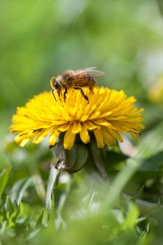 Support the 'Save America's Pollinators Act' to Suspend the Use of Neonicotinoid Pesticides - Nature and Environment - MOTHER EARTH NEWS