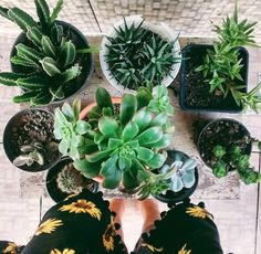 Interior goals this spring/summer/fall: to get my home filled w/ minimal-maintenance greenery.
