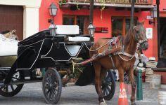 Horse Drawn Carriage in Cartagena Travel Around The World, Around The Worlds, Horse Drawn, Colonial, Horses, Vehicles, Animals, Cartagena, Caribbean