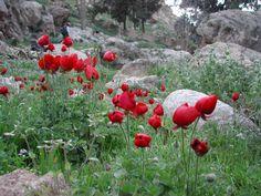 Diverses prises de vues : Ein Gedi, la mer morte, désert de Judée