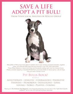Adopt A Pit Bull!