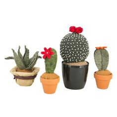 Cactus in stoffa