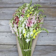 Your mom will love these cut-to-order snapdragons for Mother's Day. Ships next day from our farms on the California coast to your recipient's door.