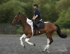 Meet Jingle, the latest recruit to Greater Manchester Police's Tactical Mounted Unit. We will be publishing regular updates on his progress as he works towards becoming a fully trained police horse. Searh #JingleJourney for the latest news. www.gmp.police.uk