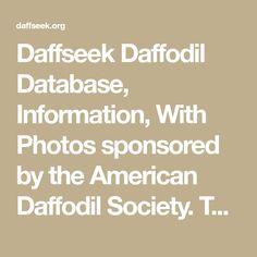 Daffodil Database with Photos Daffodil Bulbs, Daffodils, Pedigree Chart, Descendants, American, Photos, Yard, Landscape, Patio