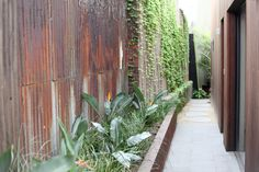 Garden Maintenance Melbourne | Garden Design Melbourne | Jenny Smith Gardens - Fitzroy