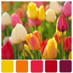Tulip Tones Color Swatch by Lisa Gorski, via Flickr