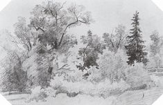 Edge of the Forest (sketch and study) - Ivan Shishkin Tree Drawings Pencil, Landscape Pencil Drawings, Landscape Sketch, Landscape Art, Nature Sketch, Nature Drawing, Art Drawings For Kids, Realistic Drawings, Tree Sketches