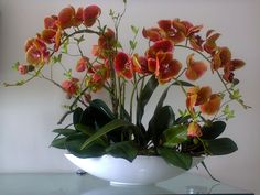 growing orchids at home
