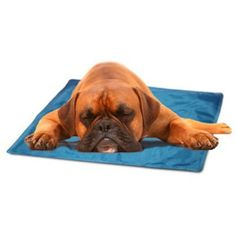 Self-cooling pad to help senior pets in warm weather.