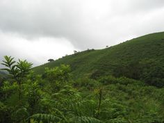 Kudremukh Forest Images edited and Effects added by Anagha Agile Systems.