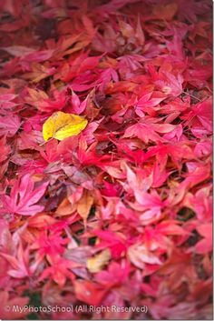 7 Photography Tips for Great Autumn Images.  How to shoot fall color