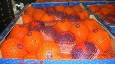 Более 30 тонн овощей и фруктов уничтожено на полигоне