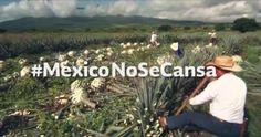"""RT @informactroll: """"México no se cansa"""",nuevo spot de @PresidenciaMX para inicio de 2015¿no vamos en #YaMeCanse22? Mira @epigmenioibarra ht…- http://www.pixable.com/share/63Ewd/?tracksrc=SHPNAND3&utm_medium=viral&utm_source=pinterest"""