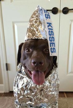 Mind Blowing Facts About Labrador Retrievers And Ideas. Amazing Facts About Labrador Retrievers And Ideas. Funny Animal Pictures, Funny Animals, Cute Animals, Baby Animals, Dog Pictures, Funny Photos, Cute Puppies, Cute Dogs, Maltese Puppies