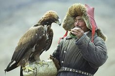 The Golden Eagle is a most impressive raptor, often used by Mongol falconers to hunt wolves. True.
