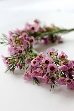 I love these cute little pink flowers. Maybe with a mix of baby's breath? Are they hardy enough?
