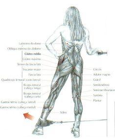 Abdução do quadril, em pé com polia baixa – Musculação e Cia