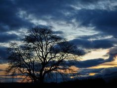 Au coucher du soleil Wild Things, Trees, Clouds, Celestial, Sunset, Nature, Photos, Outdoor, Lone Tree