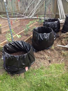 Potatos planted in garbage bags! I used chicken wire and made a circle and zip ties to hold together. Lined with 2 garbage bags with holes in the bottom for drainage. For every foot of plant growth cover half with dirt. Continue until soil reaches the top. The branches that are buried more potatoes will form. Cut zip ties and cut plastic when ready to harvest.