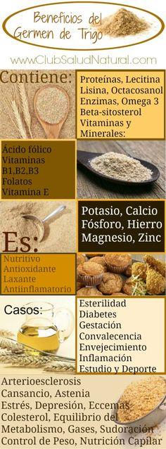 Germen de Trigo ¿Para qué sirve? - Club Salud Natural El germen de trigo es la  parte del grano más rico en nutrientes y sustancias activas, un tesoro en sí mismo de vitaminas y propiedades curativas.