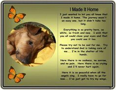 I made it home ~ loss of pet great to give to kids when they lose a pet to ease the pain - Casual Crafter Pet Loss Grief, Loss Of Dog, I Love Dogs, Puppy Love, Dog Loss Quotes, Animals And Pets, Cute Animals, Dog Poems, Pet Remembrance