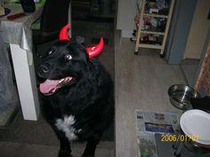 Hunde Foto: Regina und Ruby - Halloween ist ganz nah Hier Dein Bild hochladen: http://ichliebehunde.com/hund-des-tages  #hund #hunde #hundebild #hundebilder #dog #dogs #dogfun  #dogpic #dogpictures