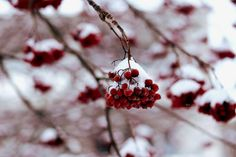 Winter | by Siniirr Berries, Christmas Ornaments, Holiday Decor, Winter, Red, Xmas Ornaments, Winter Time, Christmas Jewelry, Berry