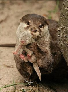a mother's love is perfect & pure! honor all creatures!!! they all possess such great capacity 4 tender & deep love!!!
