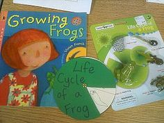 Life cycle of a frog ideas. Life cycle items by safari ltd; book Growing Frogs by Vivian French