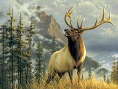 Another Bull Elk Wildlife Paintings, Wildlife Art, Beautiful Creatures, Animals Beautiful, Deer Photos, Bull Elk, Deer Family, Mule Deer, Elk Hunting