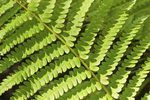How to Get Rid of Ferns (4 Steps) | eHow