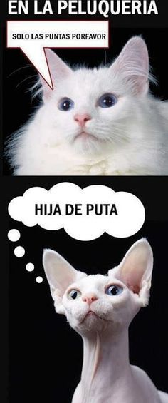 New memes en espanol gatos 26 ideas Memes Humor, Frases Humor, New Memes, Funny Jokes, Comic Foto, Humor Animal, Fun Photo, Photo Humour, Spanish Jokes