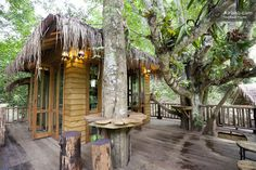 Staying in a luxury tree house in Thailand...for almost nothing! How's perfect for ya?