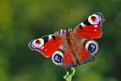 Common Beauty | Flickr - Photo Sharing!