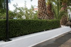 Good Plant Hedges Make Good Neighbours - Hecker Nursery Fast Growing Hedge Plants, Easy Plants To Grow, Growing Gardens, Cool Plants, Hedges Landscaping, Garden Hedges, Garden Paths, Landscaping Ideas, Best Garden Tools