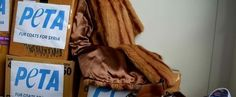 L'association de défense des animaux Peta distribue des manteaux de fourrure aux réfugiés