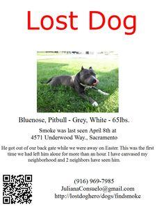 #Sacramento - LOST DOG @jadethepitbull #pets