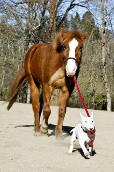 Dog and Horse.