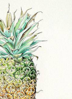 Pip Boydell illustrations - Pineapple