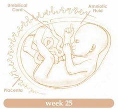 Planning for Twenty Fifth Week of Pregnancy