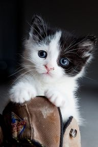 94 Black And White Cat Names 59 Awesome Names For Your Cat 10