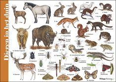 I Love School, Photos Du, Prehistoric, Science Nature, Moose Art, Comics, Painting, Products, Natural History