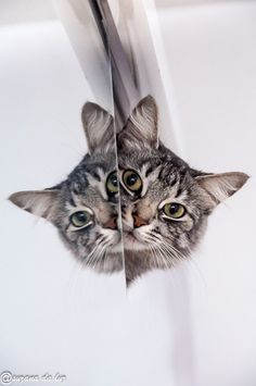 """""""The cat.  He walked by himself and all places were alike to him."""" --Rudyard Kipling"""
