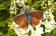 Garden, Butterfly Day, Insect, Nature, Flower #garden, #butterflyday, #insect, #nature, #flower