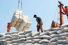 Việt Nam đã xuất khẩu được trên 5 triệu tấn gạo | TIN TỨC NÔNG NGHIỆP